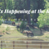 What's Happening at the Ranch